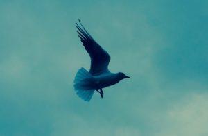 oiseau dans le ciel parisien